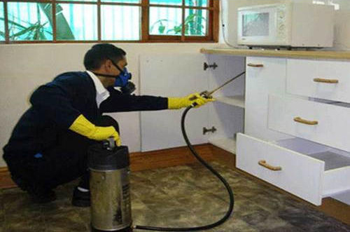 Exterminator spraying kitchen for insects